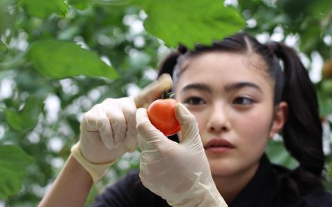 イノサク、トマト農家に弟子入り?!清瀬市の「関ファーム」で収穫体験編(東京・清瀬市)