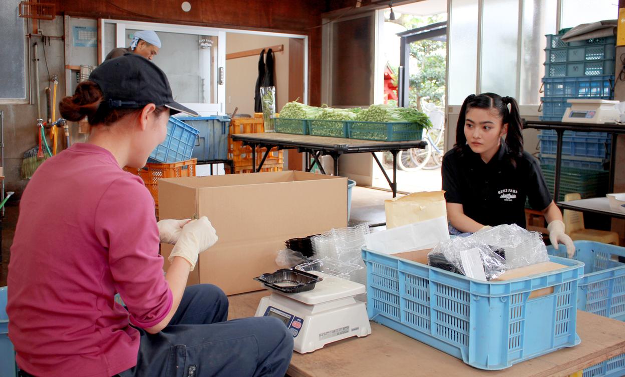 川名さんにトマトの出荷を教わるイノサク
