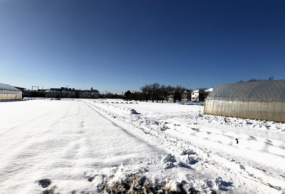 雪の残る立川市内