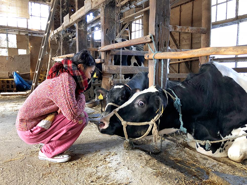 牛舎の牛を撫でるイノサク