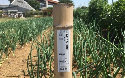 農業公園で養蜂?有機栽培とミツバチの大事な関係「足立区都市農業公園」(東京都・足立区)